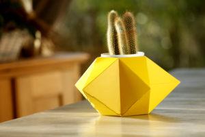 cache-pot-etoile-cactus